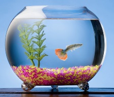 Can you take your pets with you to university, image of a fish in a bowl