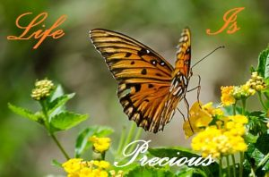 Suicide is not the answer - Image of a butterfly with the words 'life is precious'