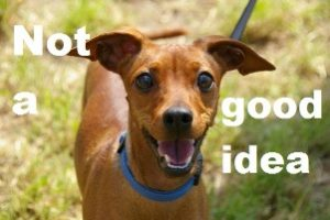 Can you take your pets with you to university, 'not a good idea' image of a small dog on a leash