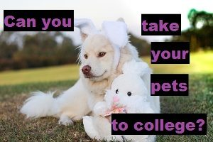 Can you take your pets with you to university, main image of a dog with a bunny stuffed toy